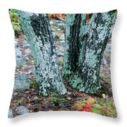 Tree Trio In Lichen At Hawn State Park Throw Pillow