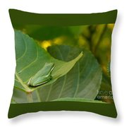Treefrog Resting Throw Pillow