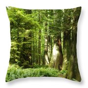 Trees At Cathedral Grove Throw Pillow