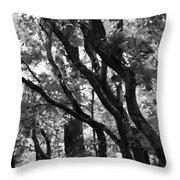Trees Beautiful Trees Throw Pillow