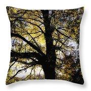 Trees During Autumn Throw Pillow