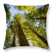 Trees Of Devoto Throw Pillow