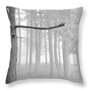 Trees On A Foggy  Morning Throw Pillow