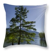 Trees With Sunbeam Throw Pillow