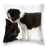 Tricolor Border Collie Pup With Black Throw Pillow