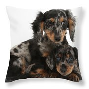 Tricolor Dachshund Puppies Throw Pillow