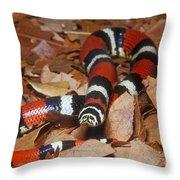 Tricolor Hognose Snake Throw Pillow