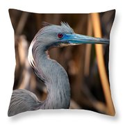 Tricolored Heron In Breeding Plumage Throw Pillow