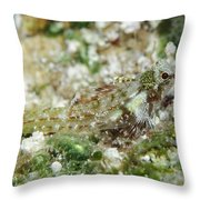 Triplefin, Indonesia Throw Pillow