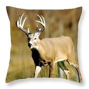 Trophy Buck Throw Pillow