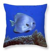 Tropical Fish Bat-fish Throw Pillow