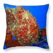 Tropical Fish Stone-fish Throw Pillow
