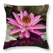 Tropical Night Flowering Water Lily  Rose De Noche IIi Throw Pillow