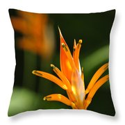Tropical Orange Heliconia Flower Throw Pillow