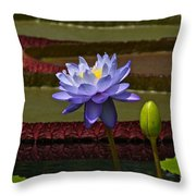 Tropical Water Lilies Throw Pillow