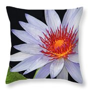 Tropical Waterlily Throw Pillow