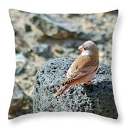 Trumpeter Finch Throw Pillow