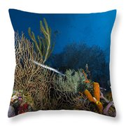 Trumpetfish, Belize Throw Pillow