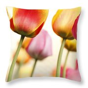 Tulip - Impressions 1 Throw Pillow