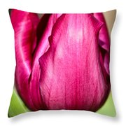 Tulip Are Better... Throw Pillow