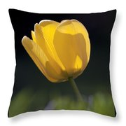 Tulip Flower Series 1 Throw Pillow