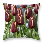 Tulip Tulipa Sp Key West Variety Flowers Throw Pillow