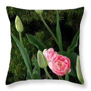 Tulips And Evergreen Throw Pillow