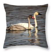 Tundra Swan And Cygnet Throw Pillow