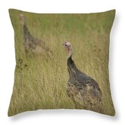 Turkeys Throw Pillow