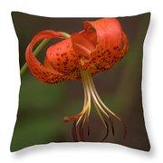 Turk's Cap Lily Throw Pillow