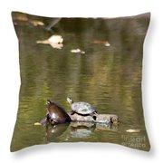 Turtle Print Throw Pillow