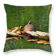 Turtle Sunbathing  Throw Pillow