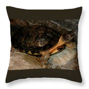 Turtle Time On The Rocks Throw Pillow