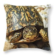 Turtle With Red Eyes On Rocks Throw Pillow