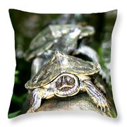 Turtles In A Row Throw Pillow