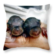 Twin Baby Squirrels Throw Pillow