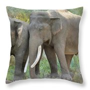 Twin Elephants Throw Pillow