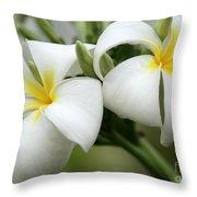 Twin Plumeria Flowers Throw Pillow