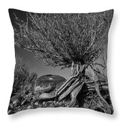 Twisted Beauty - Bw Throw Pillow