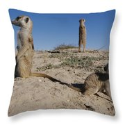 Two Adult Meerkats Suricata Suricatta Throw Pillow