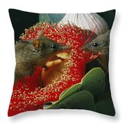 Two Australian Honey Possums Feed Throw Pillow