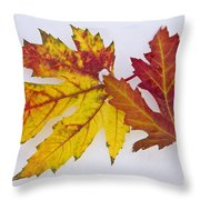 Two Autumn Maple Leaves  Throw Pillow by James BO  Insogna