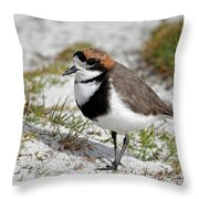 Two-banded Plover Charadrius Throw Pillow