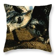 Two  Bulls Locking Heads In The Omani Throw Pillow