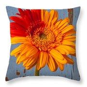 Two Color Gerbera Daisy Throw Pillow