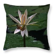 Two Frogs Sharing A Lotus Throw Pillow