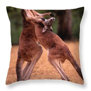 Two Kangaroos Appear To Be Dancing Throw Pillow