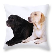 Two Labs Throw Pillow
