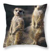 Two Meerkats, Suricata Suricatta, Stand Throw Pillow
