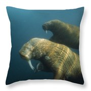 Two Pacific Walruses Swim Together Throw Pillow